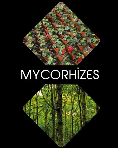 mycorhizes
